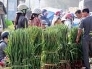 Mua sắm - Giá cả - Thương lái ngừng mua, hoa lay ơn Phú Yên dội chợ