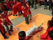 Tin tức - Báo quốc tế nói gì về lễ hội chém lợn của Việt Nam?