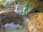 Tin tức - Dịch cúm gia cầm tại Sóc Trăng diễn biến phức tạp