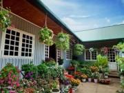 Nhà đẹp - Vườn hồng đẹp như tranh của cô giáo Hà Giang