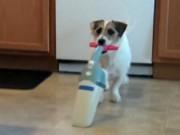 Clip Eva - Jesse - Chú chó thông minh, đảm đang nhất hành tinh