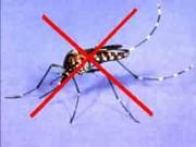 Mẹo vặt gia đình - 8 mùi hương tự nhiên khiến muỗi không dám tới gần
