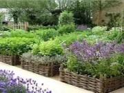 Cây cảnh - Vườn - 1m2 đất trồng cả vườn rau ban công