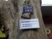 Tin hot - Chặt 6.700 cây xanh: HN treo biển lên cây để dân góp ý