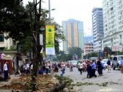Tin trong nước - Vụ chặt cây xanh: Phó Chủ tịch HN khẳng định không có mờ ám