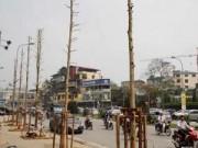 """Tin hot - Toàn cảnh vụ """"chặt hạ 6.700 cây xanh"""" giữa Thủ đô"""
