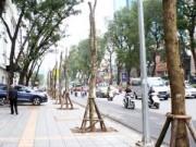 Tin hot - Nhói lòng cảnh đường phố Hà Nội vắng bóng cây