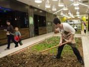 Nhà đẹp - TQ: Mốt trồng rau, nuôi lợn giữa trung tâm mua sắm