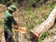 Mất 70 năm Hà Nội mới có lại hàng cây đã bị phá