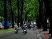 TP.HCM: Có những dự án bị bác bỏ vì gây ảnh hưởng tới cây xanh