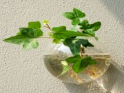 Cây cảnh - Vườn - Bàn làm việc mướt mắt với cây thủy sinh dễ trồng