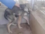 Clip Eva - Chú chó khóc thảm thiết vì lần đầu tiên được vuốt ve