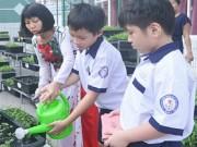 Bé trường tiểu học trồng rau sạch bán cho phụ huynh