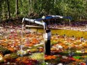 Tin tức - Bí ẩn những dòng suối có khả năng 'cải tử hoàn sinh'