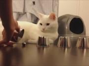 Clip Eva - Chú mèo thông minh nhất trái đất
