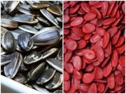 Sức khỏe - Những lưu ý khi mua hạt dưa, hạt hướng dương dịp Tết