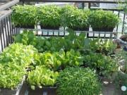 Nhà đẹp - 10 lỗi phổ biến khi trồng rau thơm và thảo mộc tại nhà