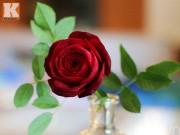 Tỉa hoa hồng nhung từ củ dền đẹp như thật!