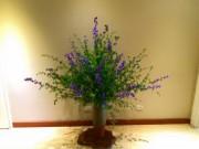 Nhà đẹp - Cắm hoa violet tươi lâu đến 7 ngày