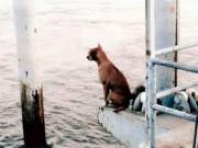Cảm động chú chó mòn mỏi đứng bến tàu ngóng chủ