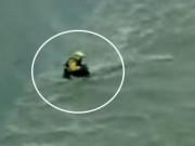Bất chấp nguy hiểm dùng trực thăng cứu chú chó bị rơi xuống sông
