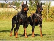 Chó dữ tấn công: Những biện pháp giảm bớt hiểm nguy
