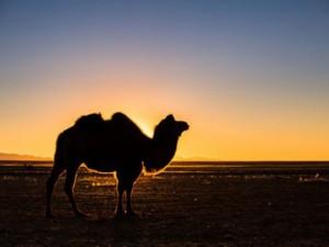Đến Mông Cổ trải nghiệm cuộc sống du mục