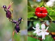 """Nhà đẹp - Những loài hoa độc - lạ nhất thế giới mà """"nhìn mãi mới biết là hoa"""""""