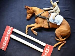 Khoảnh khắc ngộ nghĩnh tuyệt đẹp của chú chó khi ngủ