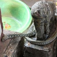Chuyện rắn thần hiển linh ở một ngôi miếu