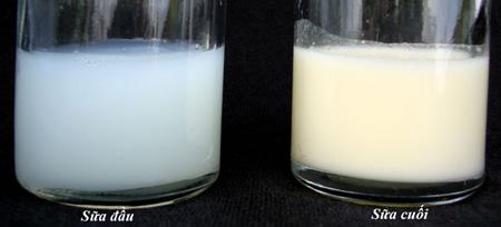 "Image result for sữa đầu sữa cuối"""