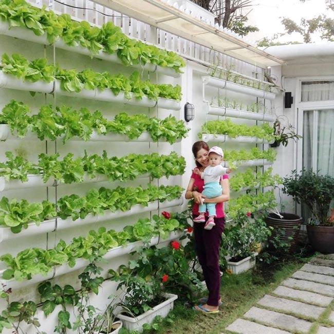 Vườn rau trong nhà để dành cho Anna ăn dặm.