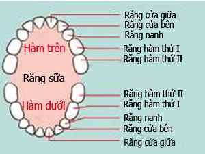 Trình tự mọc răng và cách vệ sinh răng miệng cho trẻ