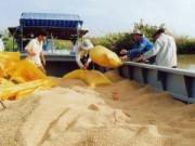 Mua sắm - Giá cả - Xuất khẩu gạo sang TQ: Coi chừng sôi động giả