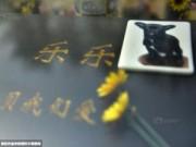 Tin tức - Nghĩa trang vật nuôi ở Bắc Kinh