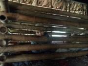 Tin tức - Người đàn bà 4 năm bị nhốt trong cũi ở Thanh Hóa