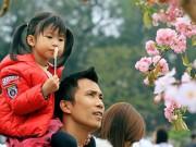Tin tức - Đổ xô ngắm hoa anh đào giữa Thủ đô