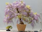 Nhà đẹp - Chị em ngất ngây trồng hoa tử đằng