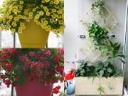 Nhà đẹp - Hà Nội: Vườn ban công bảy sắc ở tầng cao hút gió