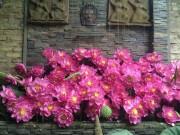 Nhà đẹp - Cách cắm hoa sen rực rỡ đón hè sang