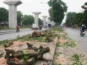 Tin tức - Thanh tra công bố các sai phạm vụ chặt cây xanh Hà Nội