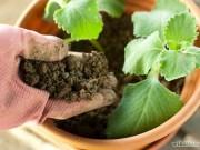 Nhà đẹp - Hướng dẫn trồng cây gia vị đơn giản cho gia đình