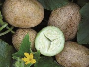 Nhà đẹp - Chị em đổ xô săn lùng dưa khoai tây giá chát