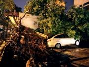 Tin tức - Hà Nội: 2 người chết, 700 cây đổ vì trận cuồng phong