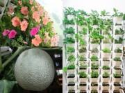 Nhà đẹp - HN: Mẹ chi 3 triệu trồng tháp rau sạch 10 tầng cho con