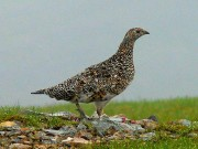 Làm mẹ - Truyện cổ tích: Sự tích chim đa đa
