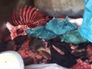 Tin tức - Hà Nội lại phát hiện hàng loạt vụ vận chuyển thực phẩm bẩn