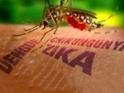 Tin tức - Việt Nam chính thức hết dịch do virus Zika