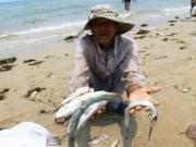 Cá chết… đau thắt lòng với 'khúc ruột miền Trung'