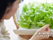 Nhà đẹp - Trồng rau không cần đất, không cần nắng kiểu Nhật